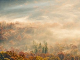 Morning Nature Forest Autumn Fog hd Wallpaper