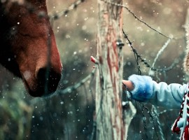 Winter Snowflakes Horse Child Photo hd Wallpaper